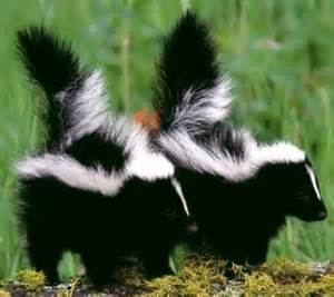 I'm thinking of getting a pair of attack skunks to counteract the chemical warfare we are subjected to.